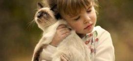 Bolest ogrebotine mačke