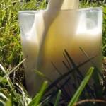 Od 1. januara mleko bez aflatoksina