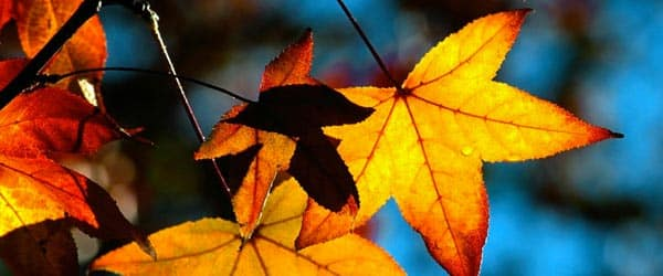 pocinje-jesen