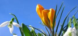 Počinje proleće