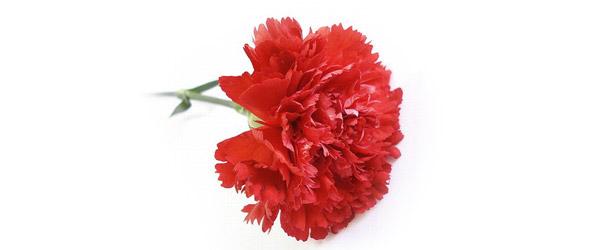 za-mamu-cvet
